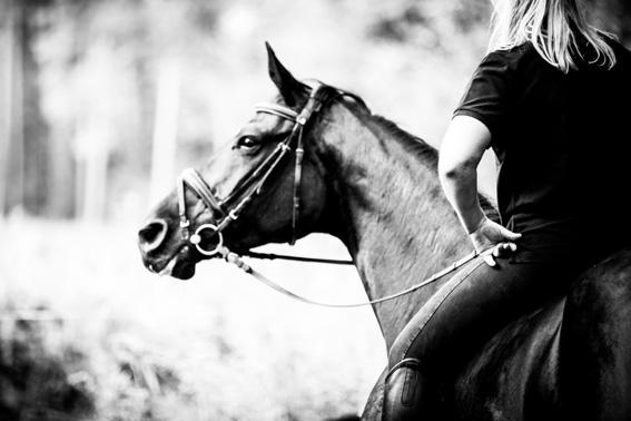 Anwaeltin Pferderecht